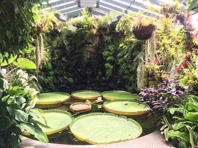 La Mortella Gardens giant lily_Villa Italy