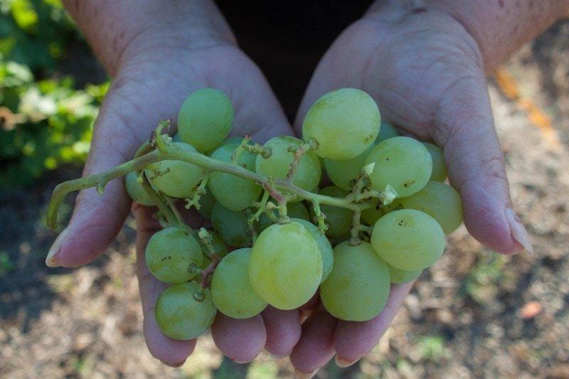 Pantelleria Wine Guide_Villa Italy