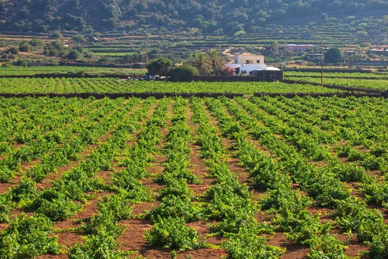 Discovering the wines of Pantelleria | Villa Italy