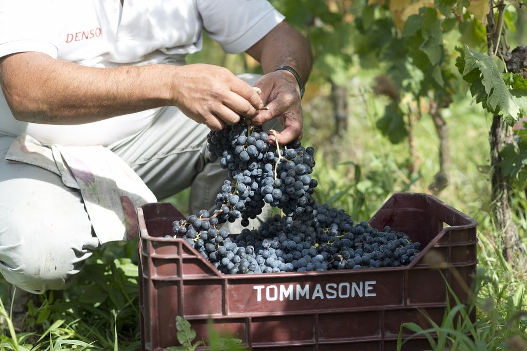wines of ischia