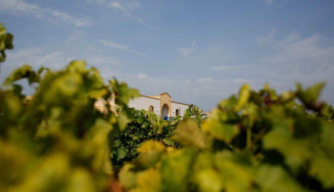 Pantelleria wine