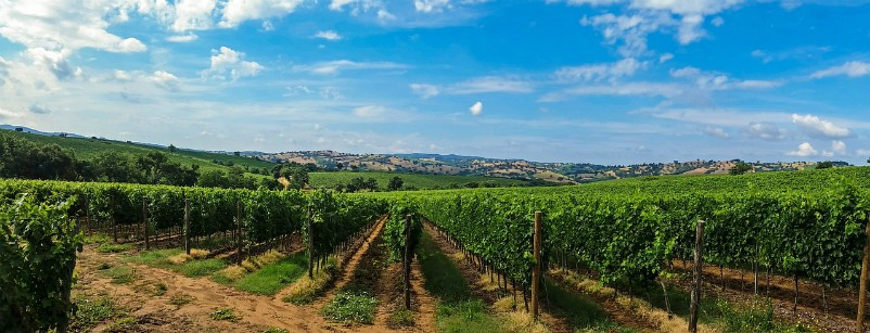 Tuscany vineyards_Villa Italy
