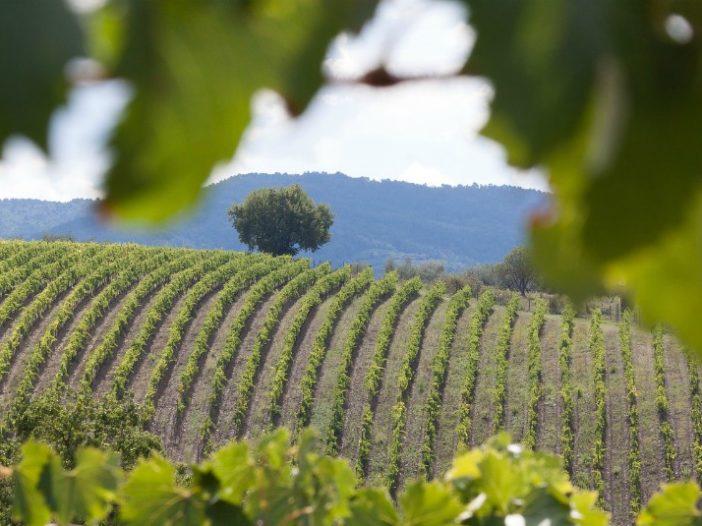 Tuscany Vineyard_Villa Italy